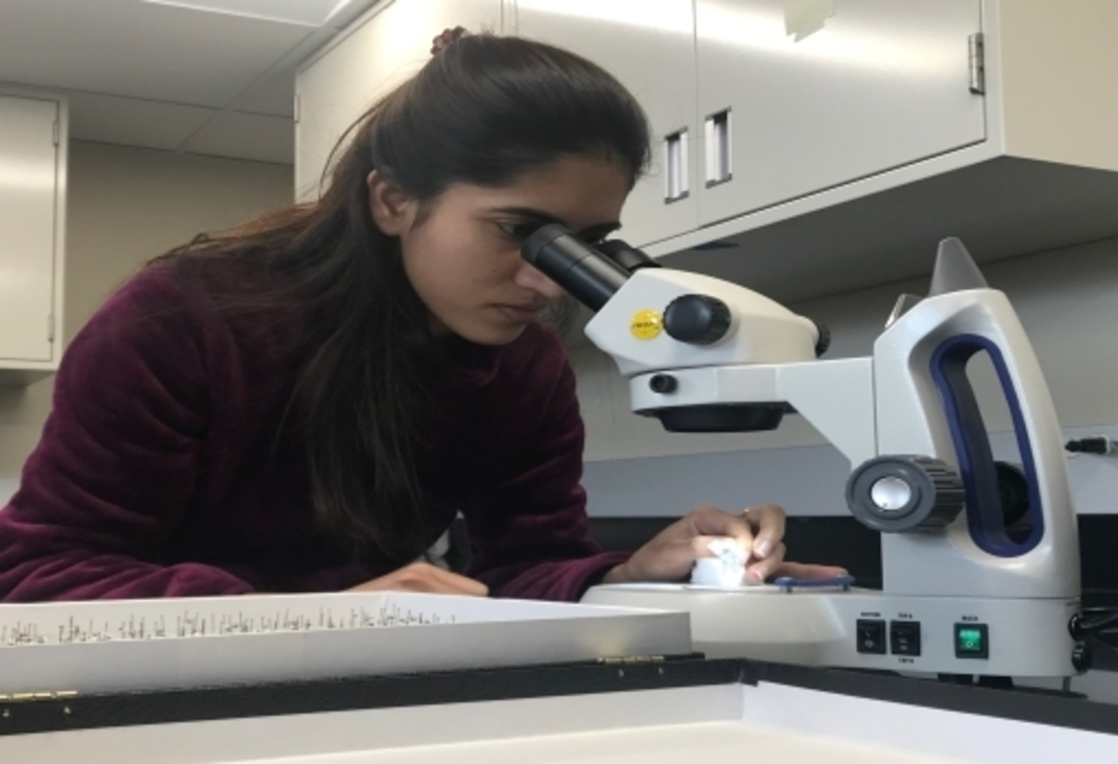 Student looking intro microscope